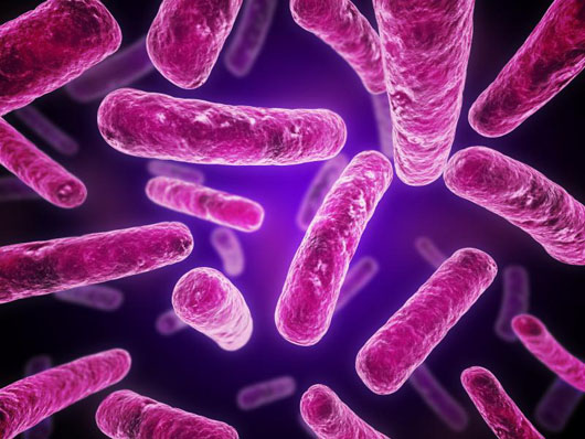 BacteriaComputer