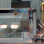 Natalie Jeremijenko, Feral Robotic Dog, 2006