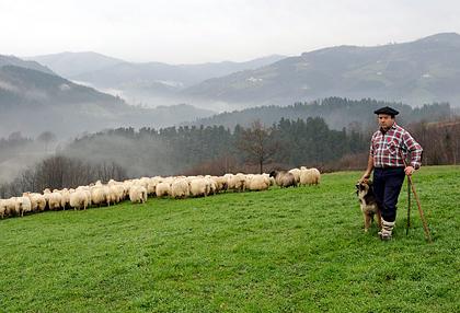shepherd_sm.jpg