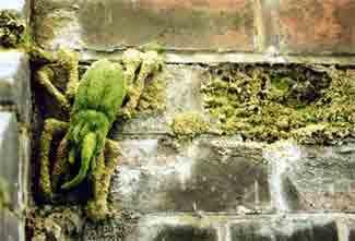 Artist Ladybird. image via woostercollective.com