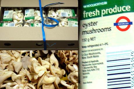 Bakerloo Oyster Mushrooms